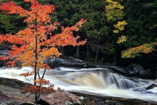 P1123D - Pollard, David W. - Autumn, Lower Rosseau Falls