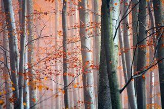 P891D - PhotoINC Studio - Autumn Woods