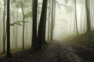 P922D - PhotoINC Studio - Green Woods 1