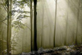 P923D - PhotoINC Studio - Green Woods 2