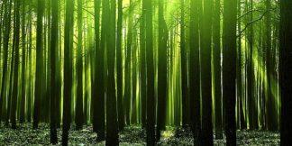 P924D - PhotoINC Studio - Green Woods 3