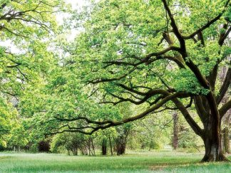 P925D - PhotoINC Studio - Green Woods 4