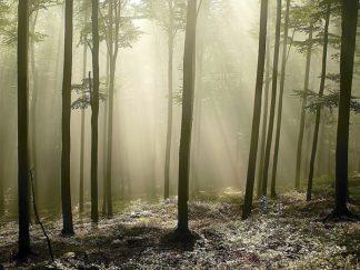 P926D - PhotoINC Studio - Green Woods