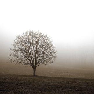 P947D - PhotoINC Studio - Tree in Mist 1
