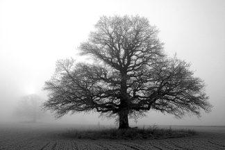 P948D - PhotoINC Studio - Tree in Mist 2