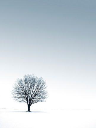 P949D - PhotoINC Studio - Tree in Winterscape