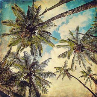 P992D - Price, Melanie Alexandra - Kauai Island Palms