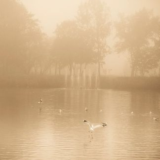 P998D - Pechmann, Joanna - Golden Lake in Fog