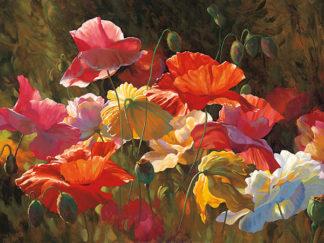 R575 - Roulette, Leon - Poppies in Sunshine
