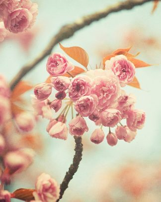 S1278D - Suchocki, Irene - Waiting For Spring