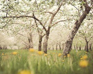 S1280D - Suchocki, Irene - Quiet Orchard