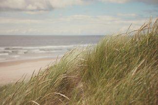 S1282D - Suchocki, Irene - Beach Grass I