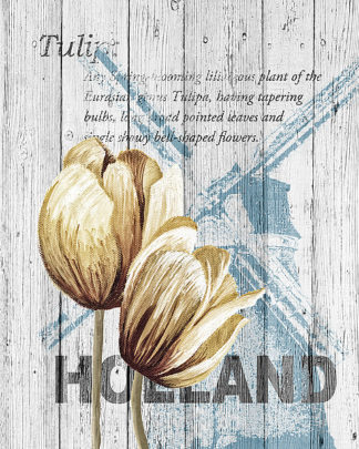 S1326D - Soave, Alicia - Holland Tulips
