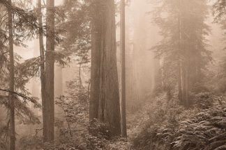 S1395D - Svibilsky, Igor - Enchanted Forest II
