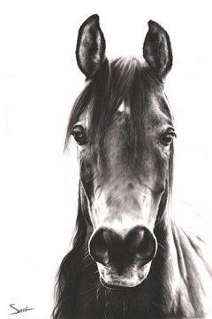 S1463D - Sweet, Eric - Horse Portrait