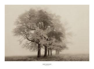 S774 - Svibilsky, Igor - Harmony in Fog