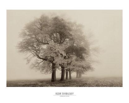 S778 - Svibilsky, Igor - Harmony in Fog