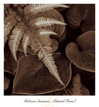 S785 - Swanson, Rebecca - Painted Ferns I