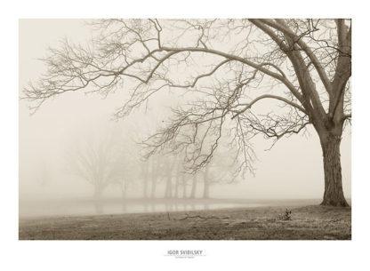 S847 - Svibilsky, Igor - Layers of Trees I