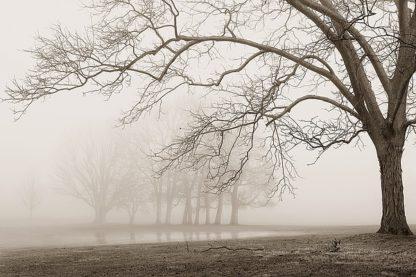 S847D - Svibilsky, Igor - Layers of Trees I