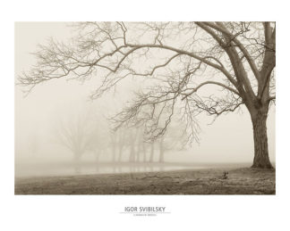 S848 - Svibilsky, Igor - Layers of Trees I