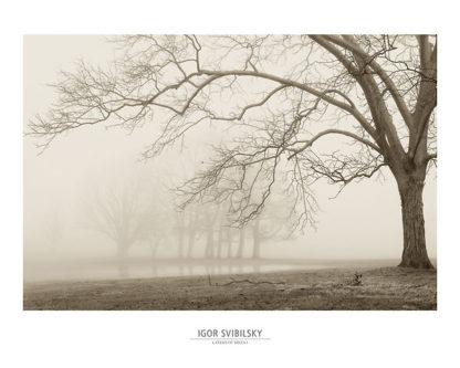 S848 - Svibilsky, Igor - Layers of Trees I