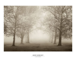 S850 - Svibilsky, Igor - Layers of Trees II