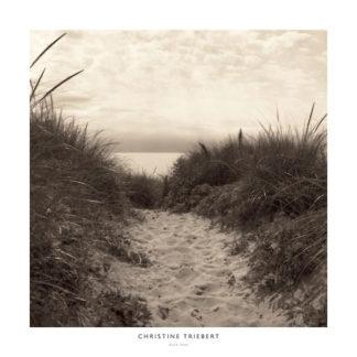 T276 - Triebert, Christine - Dune Path