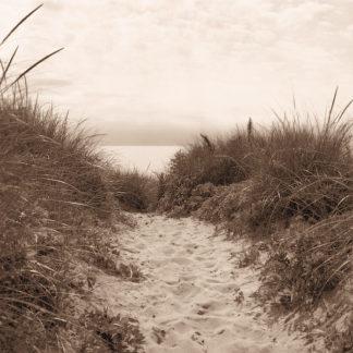 T276D - Triebert, Christine - Dune Path