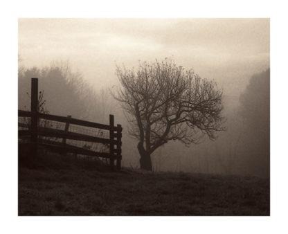 T284 - Triebert, Christine - Mountain Meadow Farm