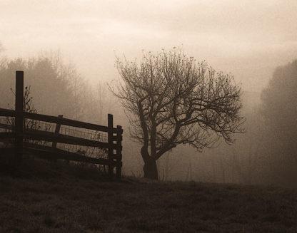 T284D - Triebert, Christine - Mountain Meadow Farm
