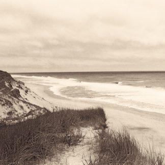 T306D - Triebert, Christine - Wellfleet Dune