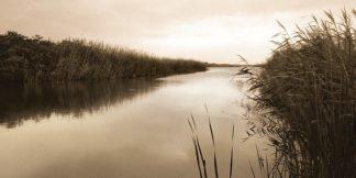 T313D - Triebert, Christine - River Reeds