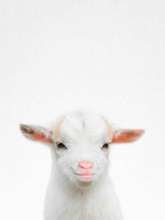 T524D - Tai Prints - Baby Goat