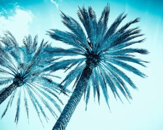 T525D - Tai Prints - Chic Palms