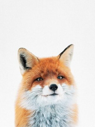 T528D - Tai Prints - Fox