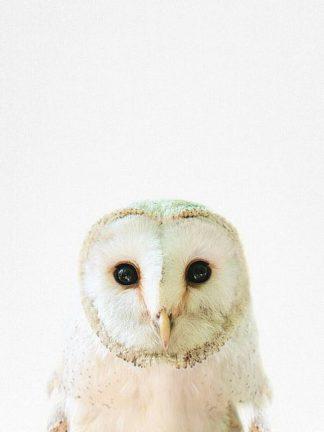 T532D - Tai Prints - Owl