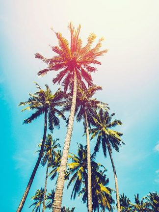 T533D - Tai Prints - Palms in the Sun