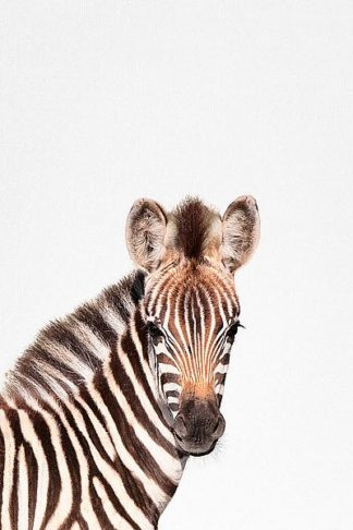 T557D - Tai Prints - Baby Zebra
