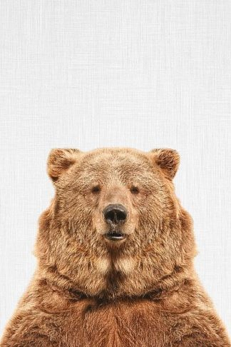 T558D - Tai Prints - Bear