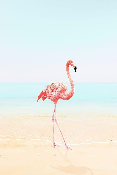 T563D - Tai Prints - Flamingo on the Beach II