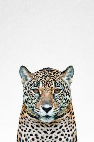 T569D - Tai Prints - Leopard II