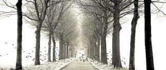 V513D - Van de Goor, Lars - Birds