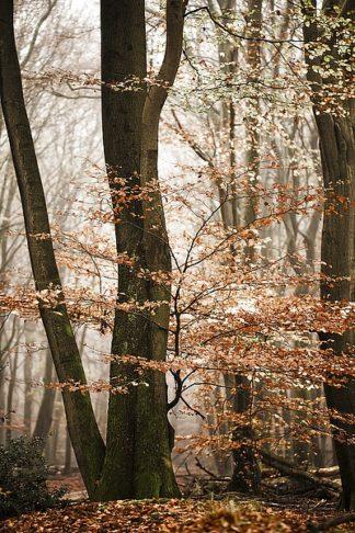 V514D - Van de Goor, Lars - Bronze Tree