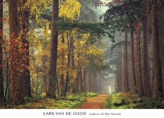 V515 - Van de Goor, Lars - Colors of the Forest