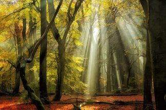 V518D - Van de Goor, Lars - Yellow Leaves Rays
