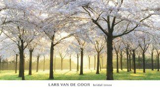 V561 - Van de Goor, Lars - Bridal Trees