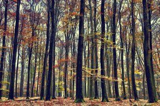 V565D - Van de Goor, Lars - Nature's Palette