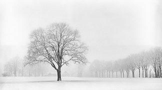 V567D - Van de Goor, Lars - Standing Alone