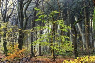 V568D - Van de Goor, Lars - Colors of the Forest IV